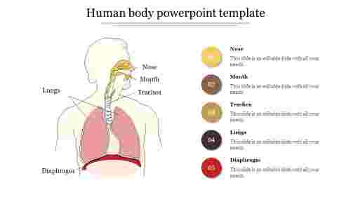Best Human body powerpoint template