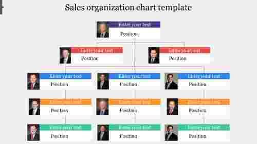 Professional sales organization chart template