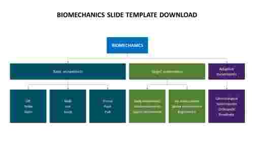 biomechanics%20slide%20template%20download%20hierarchy%20model