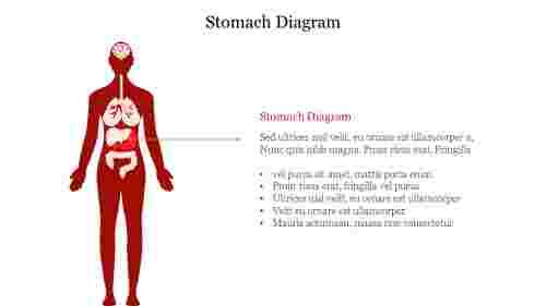 Stomach%20Diagram%20PPT%20Slide