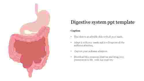 Nice%20Digestive%20system%20PPT%20Template