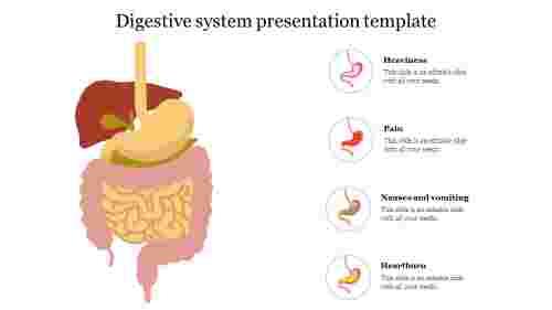 Best%20Digestive%20system%20presentation%20template%20