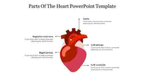 Five%20Node%20Parts%20Of%20The%20Heart%20PowerPoint%20Template